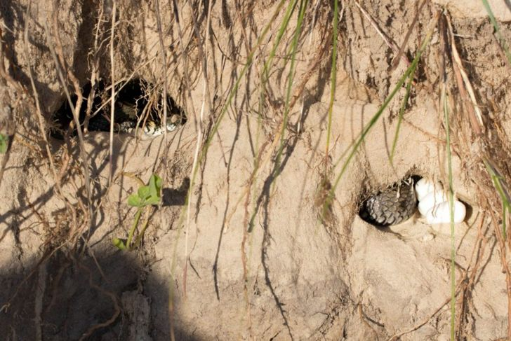 habitat ball python