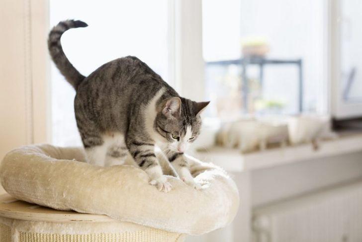 kittens knead