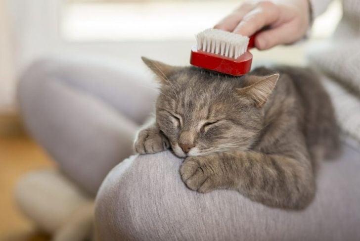 cats knead