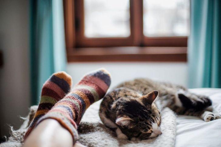 purr comfort