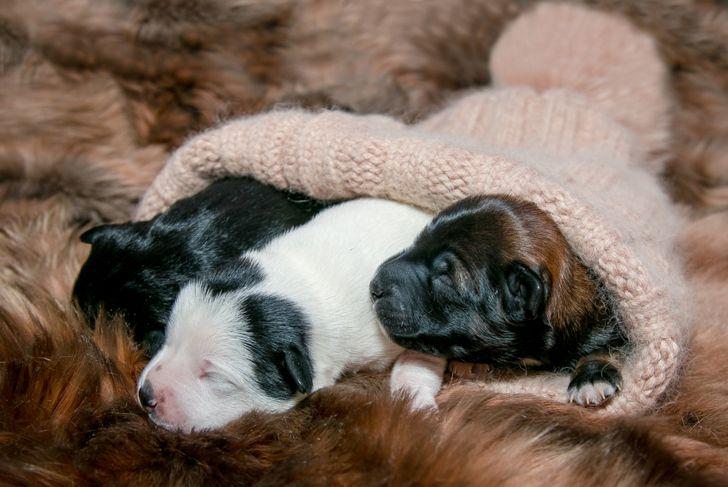 puppies pet names