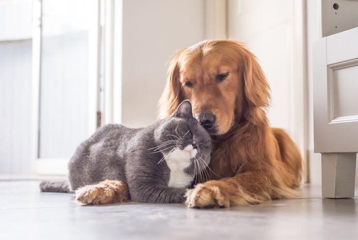pet names animals