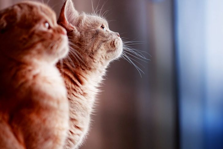 kittens profile shot