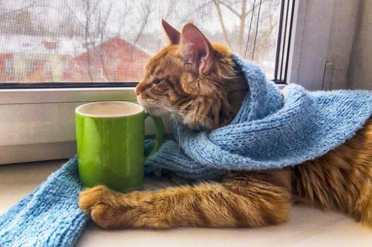 Cat doing self care