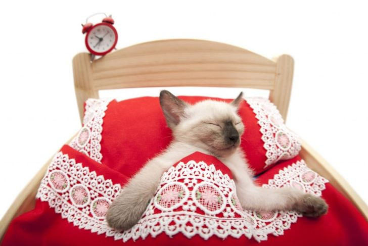waking sleeping cat feline safe