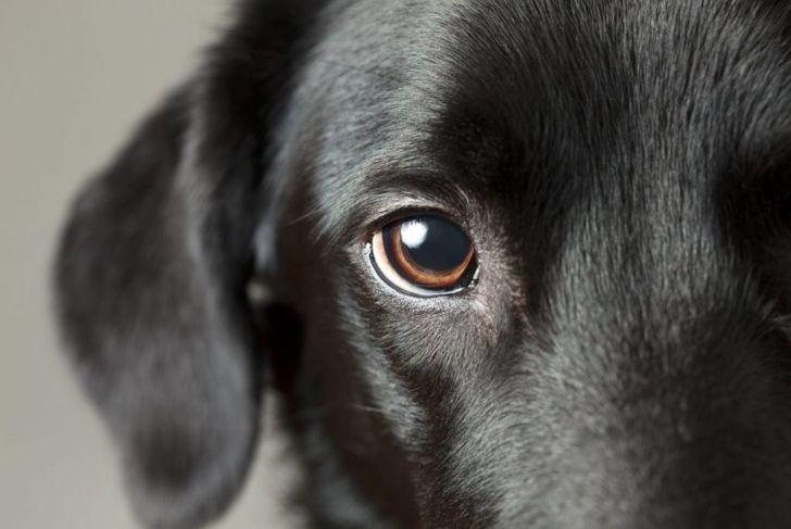 Close-up of black dog's eye