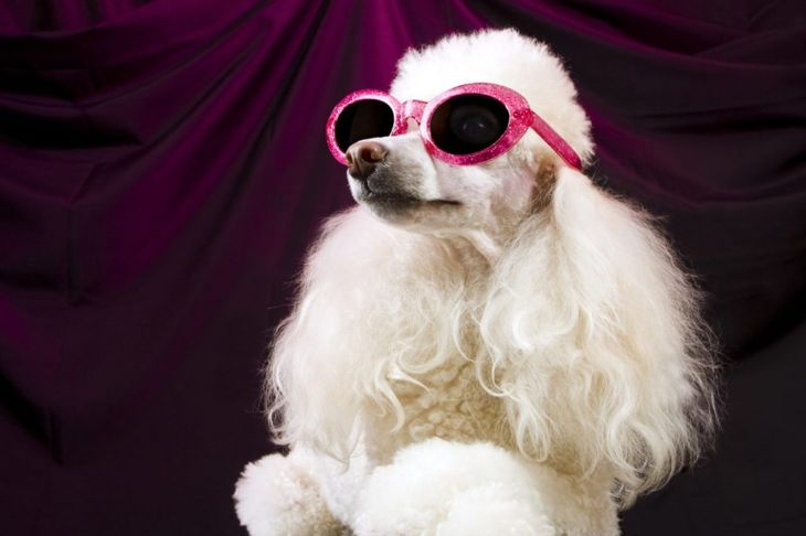 Sophisticated names for lady dogs