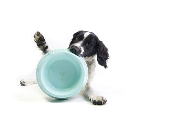 dog holding empty bowl