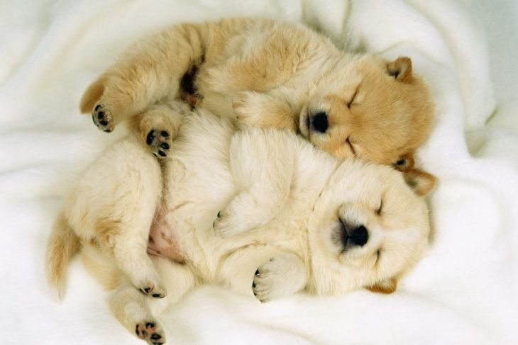 Snuggly puppies