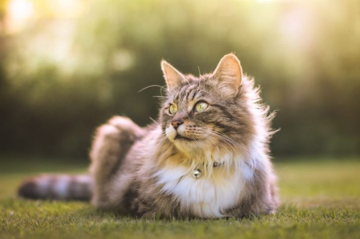 Long haired cat in garden