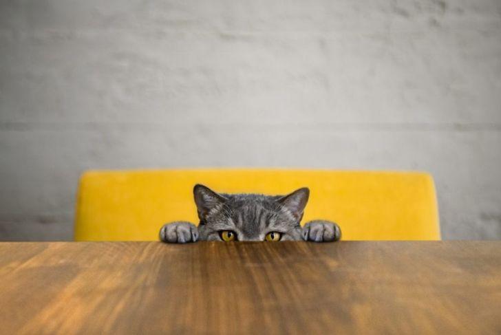 I see you, human