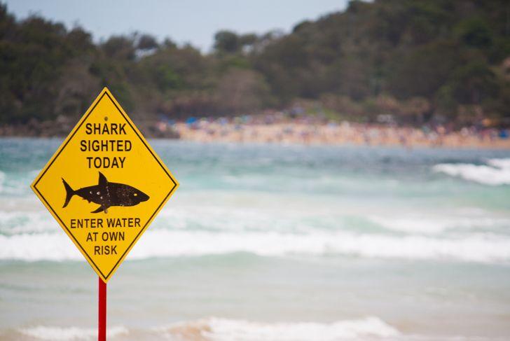 Shark warning sign on the beach