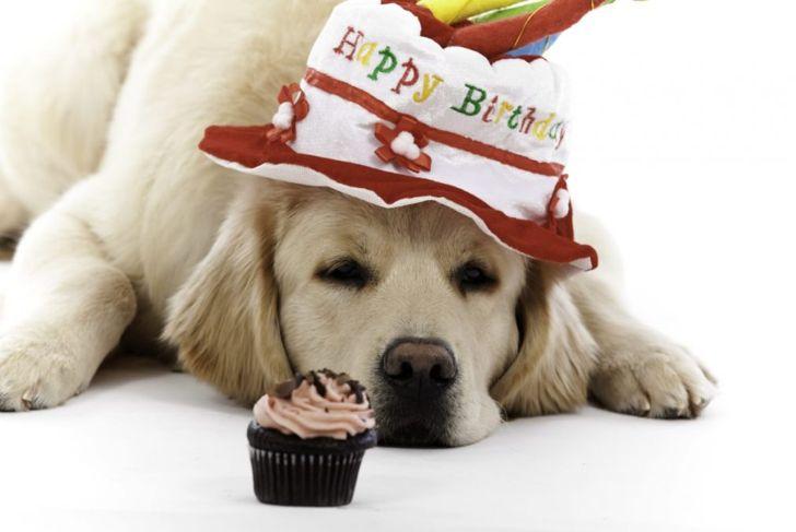 Bake dog treats