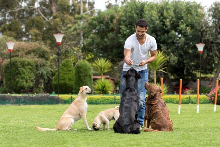 Happy man training dogs treats