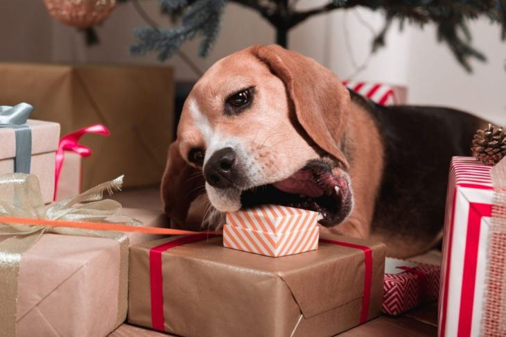 Dogs find chocolate gifts