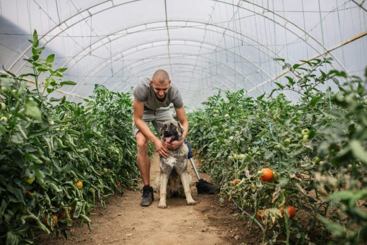 dog, poison, tomato, discomfort