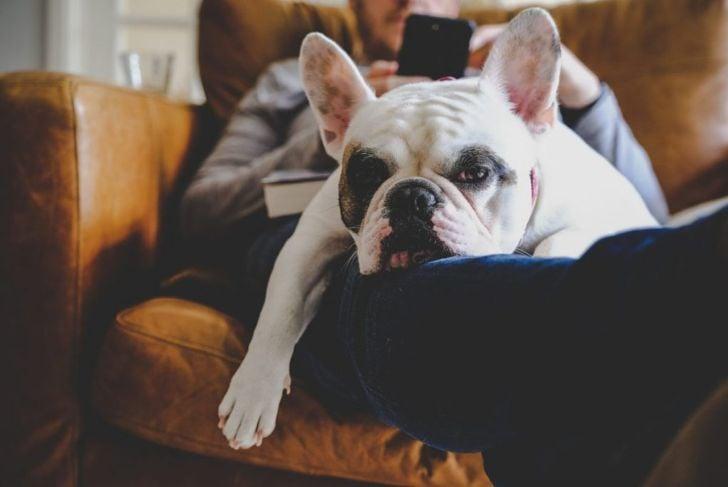 feels tired symptom fatigue dog