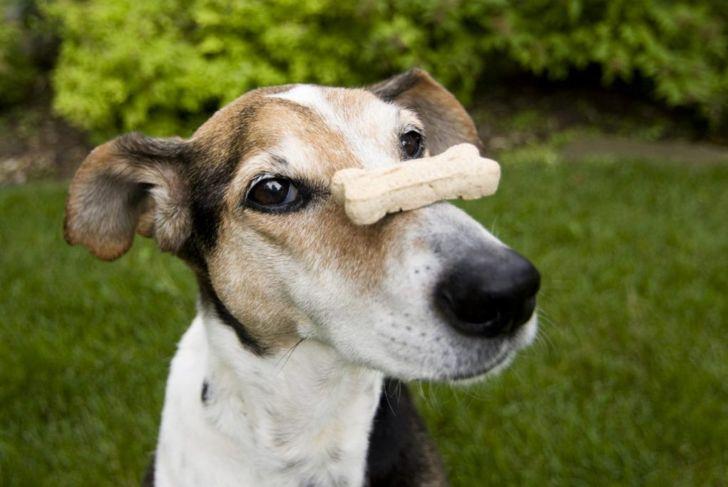 Dog Treat Biscuit