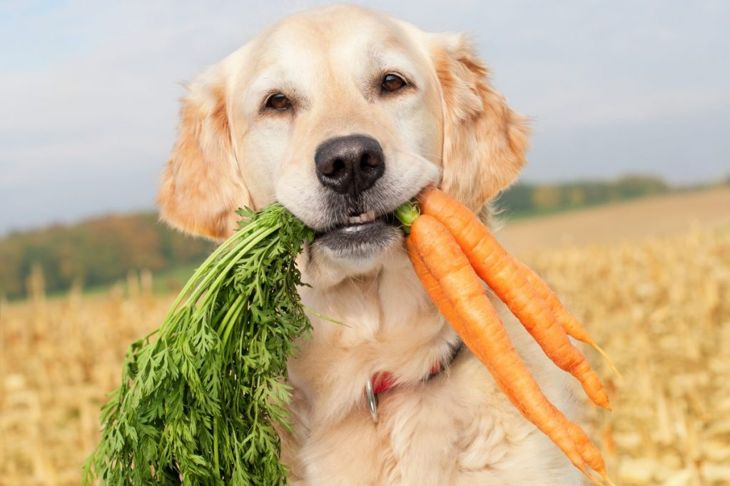 Dog holding bunch carrots