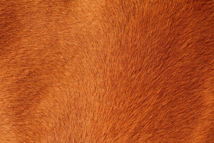 dog, coat, hair