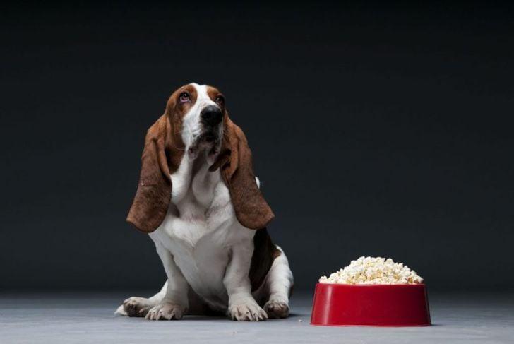 dog popcorn food bowl