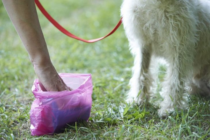 hookworm prevention cleaning dog feces