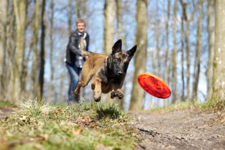 Active healthy dog frisbee