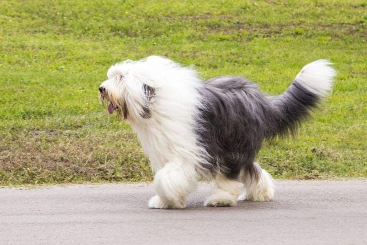 Have an ambling gait