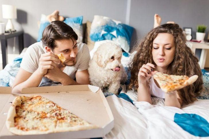 Dog begging for pizza