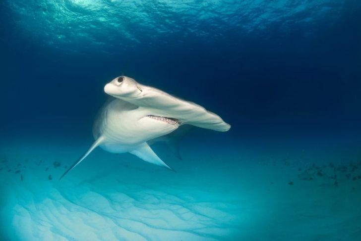 shark, risk, illegal, drown, limits