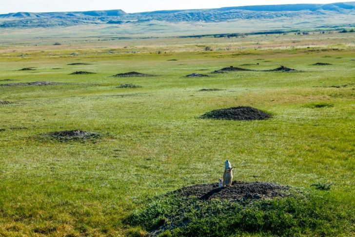 prairie dog burrow tower