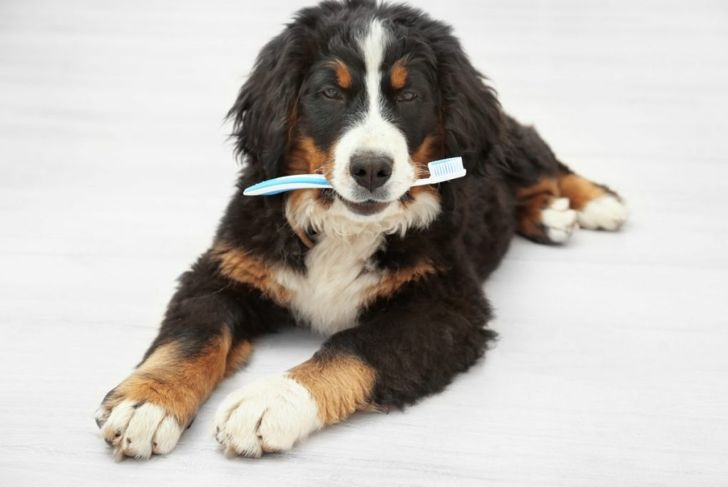 dog canine tooth brush