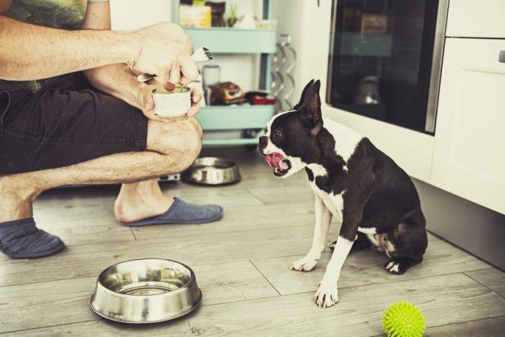 Feeding Dog Food