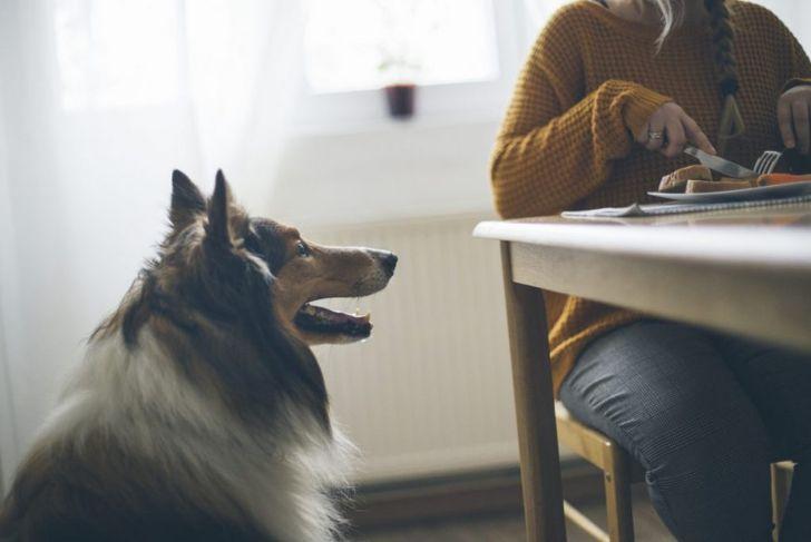 Dog looking at woman eating