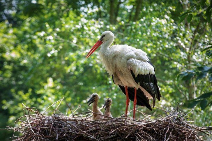 stork heat excrement
