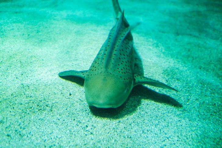 a catshark is sleeping in the sand on the ground