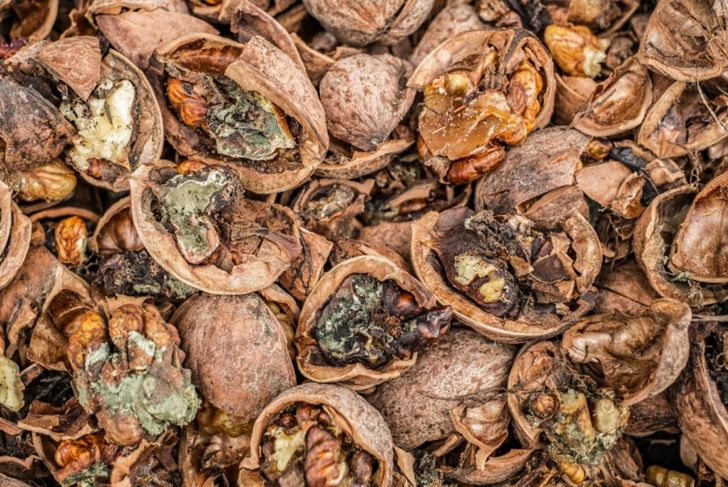 Cracked nuts rotten with mold, close up view