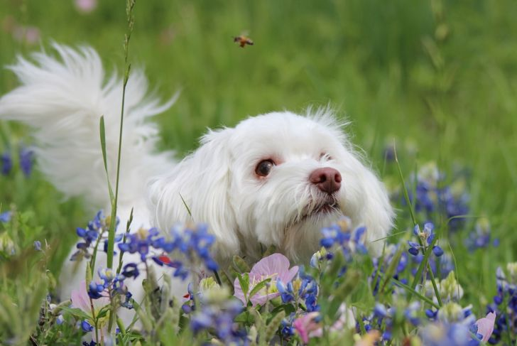 A dog amongst wildflowers admiring a bee