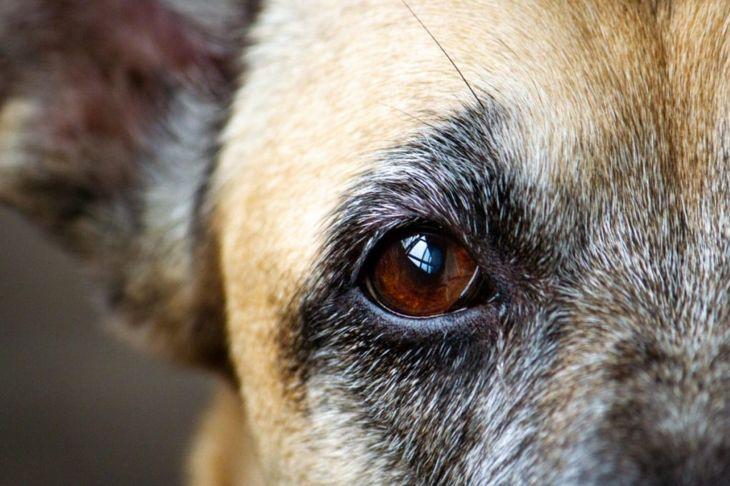 cornea, damage, scratch, redness