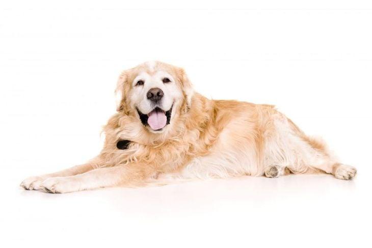 cortisol stress dog