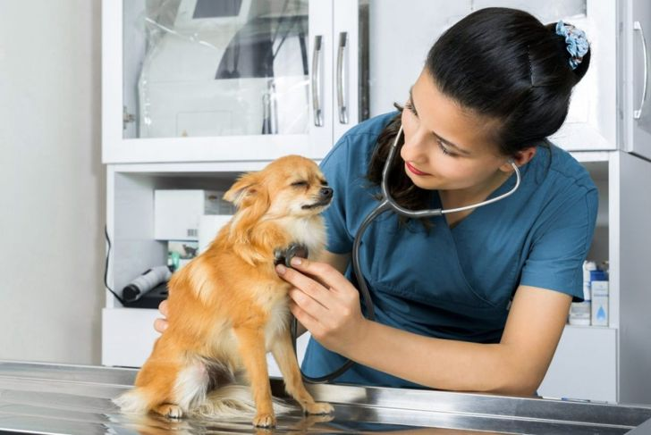diagnose, aspiration, infection, veterinarian, health