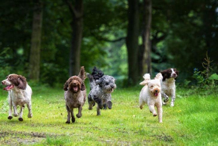 happy smiling dogs enjoying their freedom
