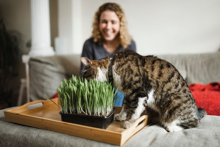 domestic cat, animal themes, pet food, grass