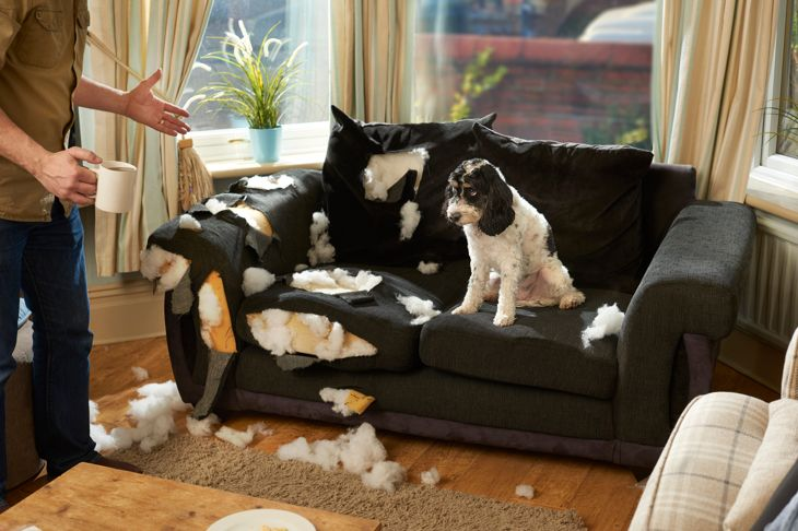a man has nipped out for a cup of team whilst his canine pal has destroyed the sofa .