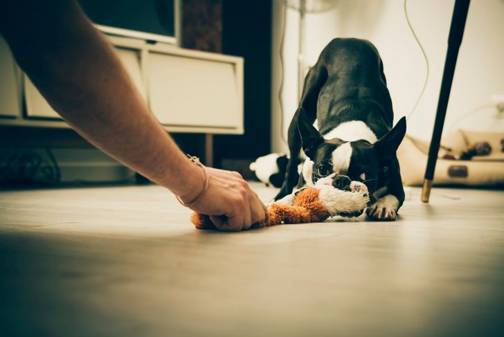 Playing with dog in living room