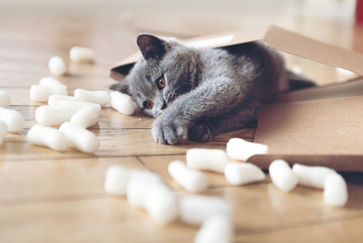 Kitten playing in a parcel with packing peanuts