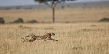 What Are The Fastest Animals In The World?