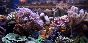 Saltwater Fish for Your Aquarium