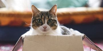 Ways to Make Your Home Perfect for Your Pet
