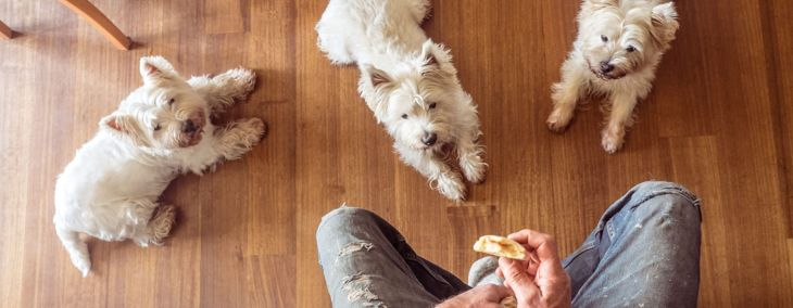 People Foods That Are Safe for Your Dog